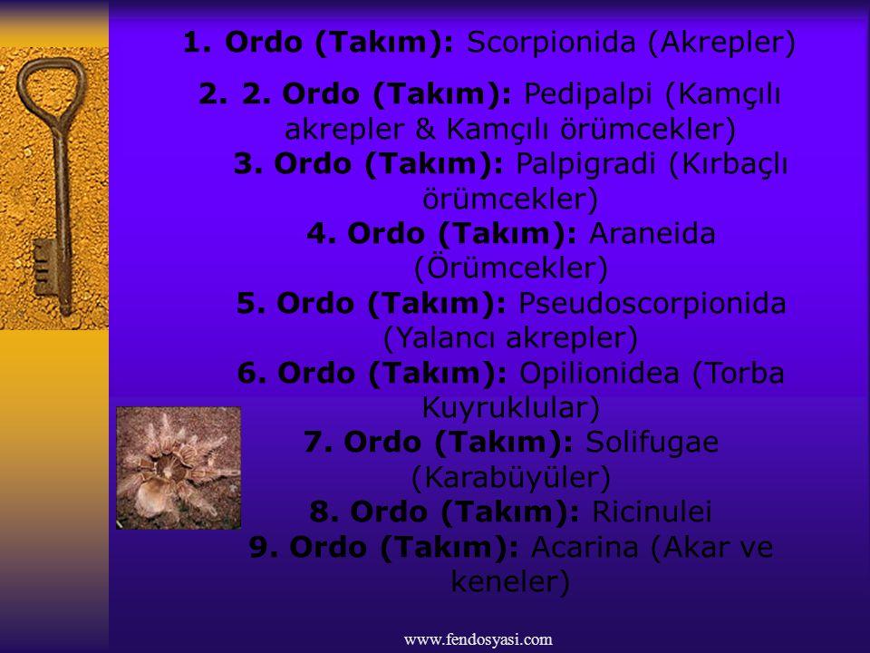 www.fendosyasi.com 1.Ordo (Takım): Scorpionida (Akrepler) 2.2. Ordo (Takım): Pedipalpi (Kamçılı akrepler & Kamçılı örümcekler) 3. Ordo (Takım): Palpig