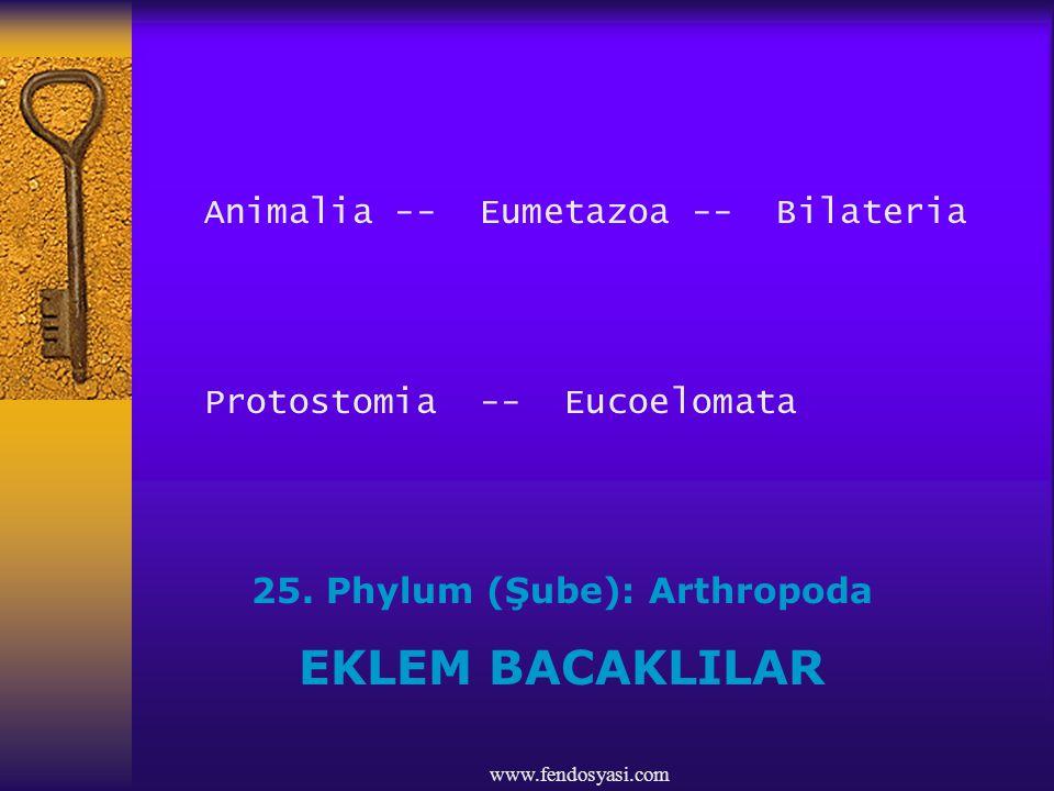 www.fendosyasi.com Animalia -- Eumetazoa -- Bilateria Protostomia -- Eucoelomata 25. Phylum (Şube): Arthropoda EKLEM BACAKLILAR