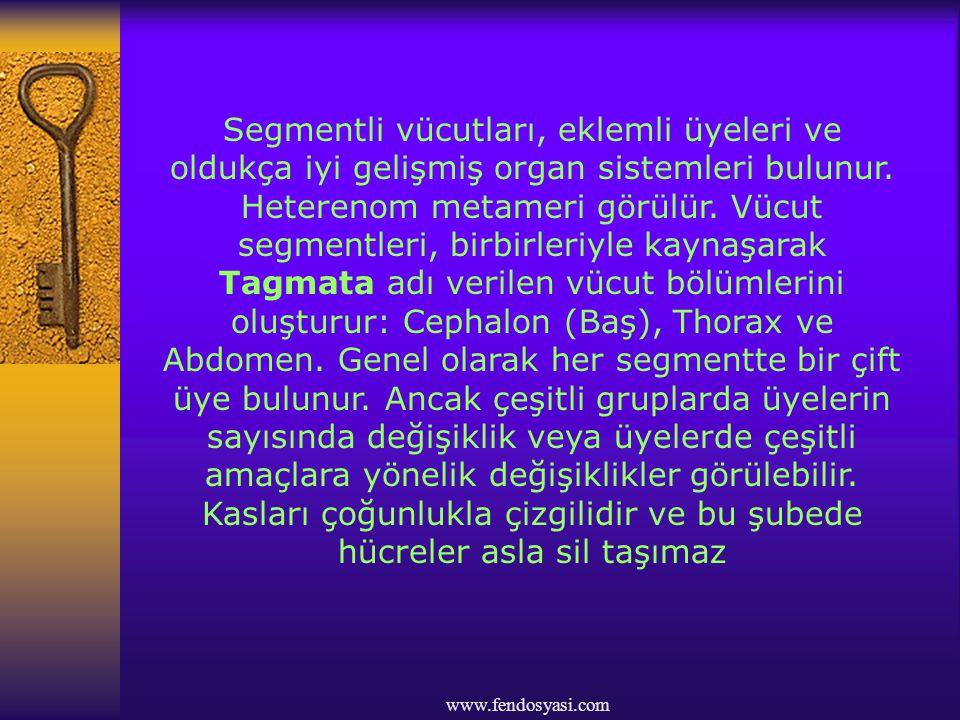 www.fendosyasi.com Solunum, solungaçlarla gerçekleştirilir.