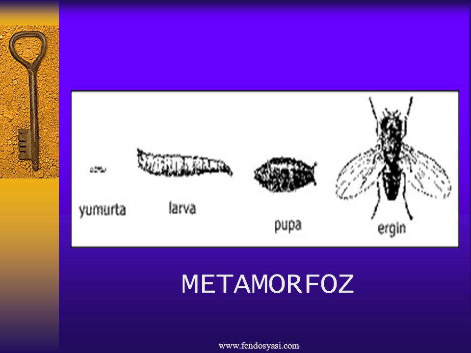 www.fendosyasi.com METAMORFOZ