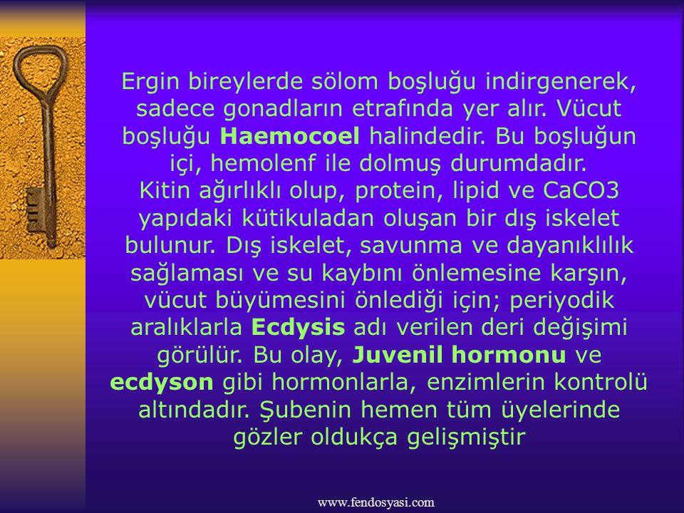 www.fendosyasi.com Ağız ve anüs gelişmiştir.Sindirim sistemi tam ve tek yönlüdür.