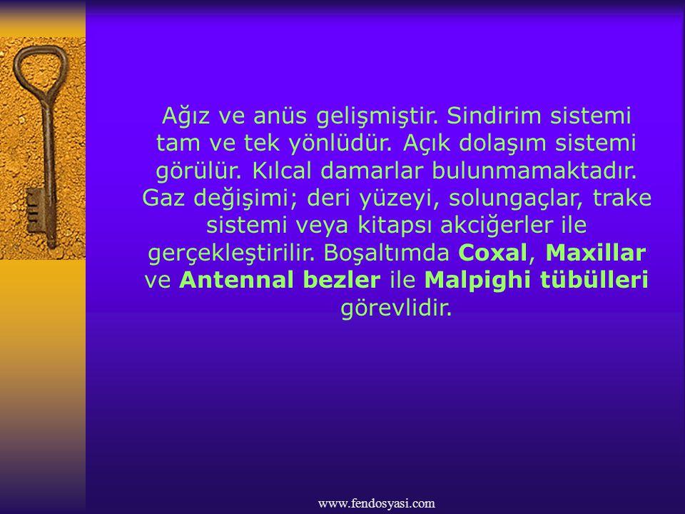 www.fendosyasi.com Eşeyler ayrıdır.