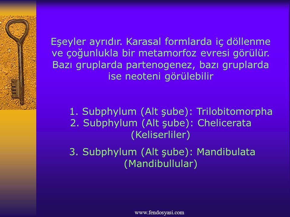 www.fendosyasi.com Eşeyler ayrıdır. Karasal formlarda iç döllenme ve çoğunlukla bir metamorfoz evresi görülür. Bazı gruplarda partenogenez, bazı grupl
