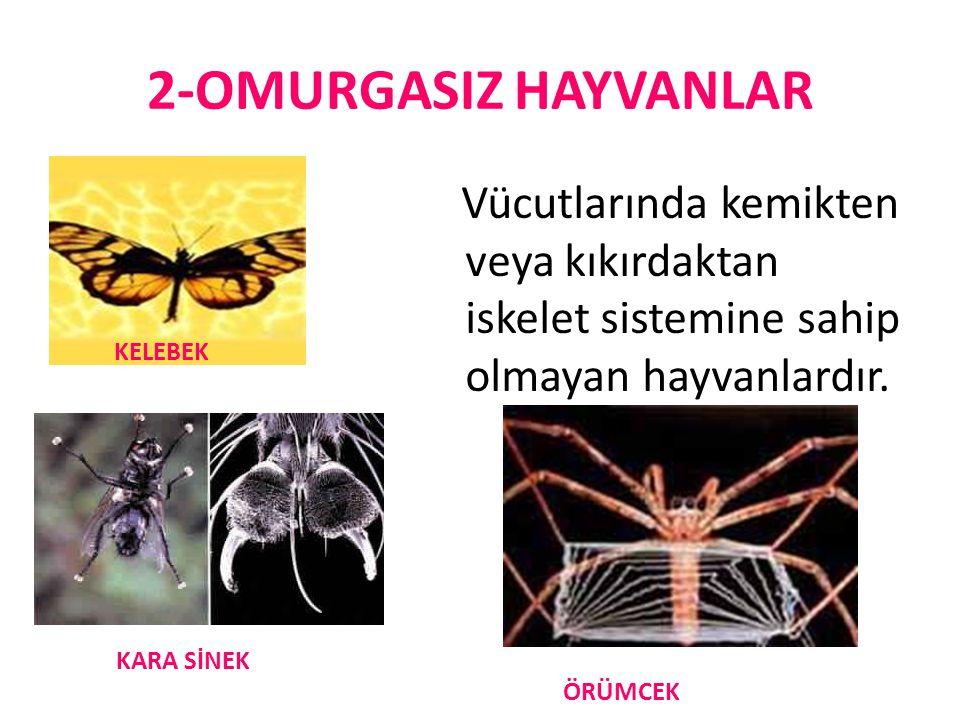 OMURGASIZ HAYVANLAR Omurgasızların bir bölümü suda bir bölümü de karada yaşar.
