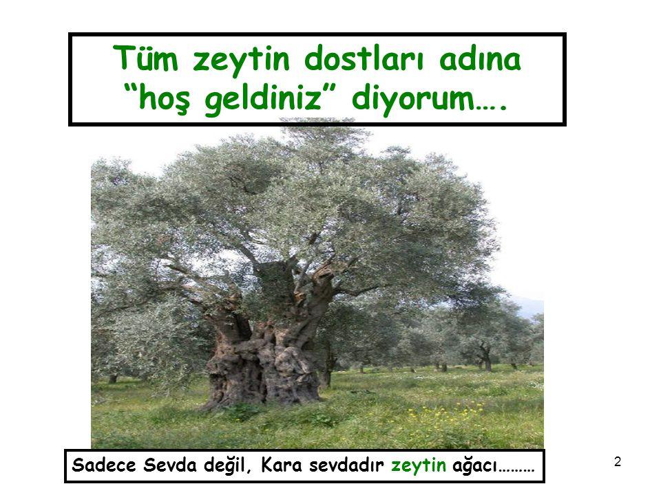 """2 Sadece Sevda değil, Kara sevdadır zeytin ağacı……… Tüm zeytin dostları adına """"hoş geldiniz"""" diyorum…."""