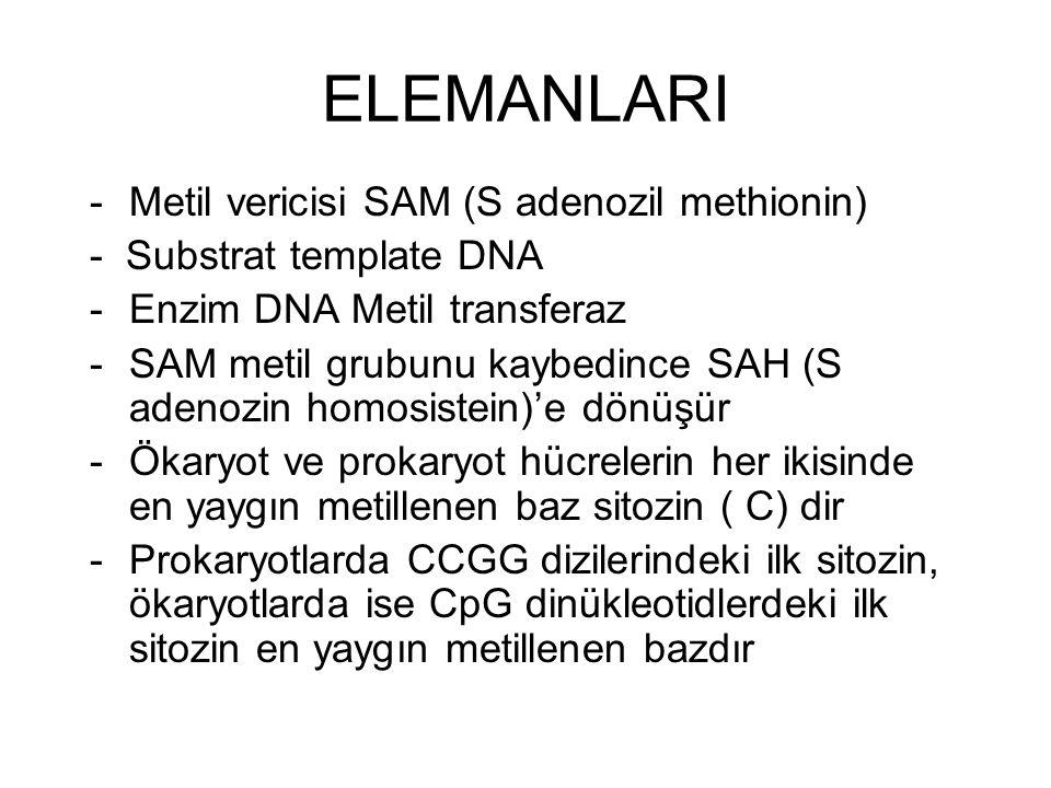 ELEMANLARI -Metil vericisi SAM (S adenozil methionin) - Substrat template DNA -Enzim DNA Metil transferaz -SAM metil grubunu kaybedince SAH (S adenozin homosistein)'e dönüşür -Ökaryot ve prokaryot hücrelerin her ikisinde en yaygın metillenen baz sitozin ( C) dir -Prokaryotlarda CCGG dizilerindeki ilk sitozin, ökaryotlarda ise CpG dinükleotidlerdeki ilk sitozin en yaygın metillenen bazdır