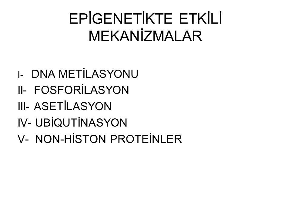 EPİGENETİKTE ETKİLİ MEKANİZMALAR I- DNA METİLASYONU II- FOSFORİLASYON III- ASETİLASYON IV- UBİQUTİNASYON V- NON-HİSTON PROTEİNLER