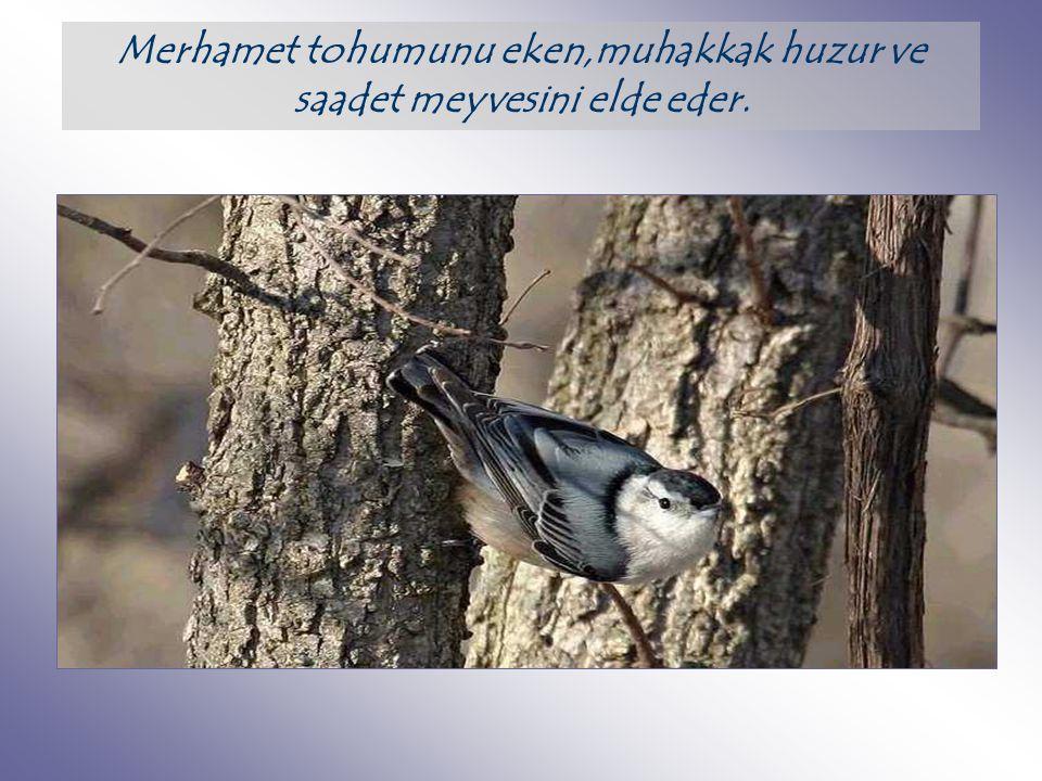 Lütf, güzellikle, tevazu ve mahviyetle,gönül alarak yapılan muameledir. Temiz kalplilik ve yüksek insanlık hislerinin eseridir.