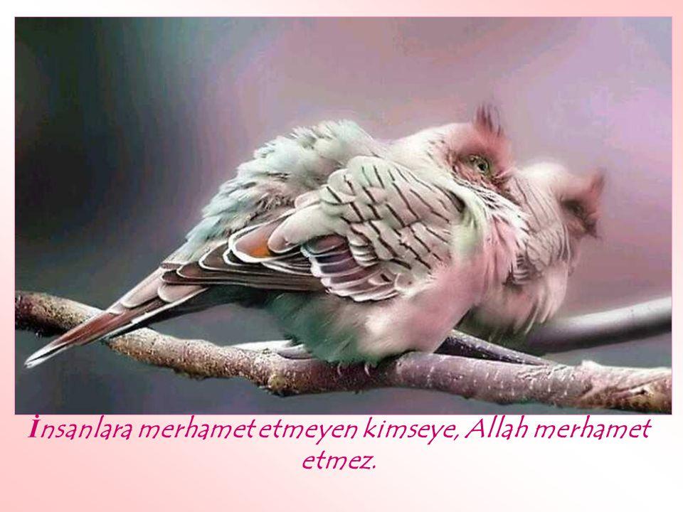 Allah, yumu ş ak huylu din karde ş lerine ş efkat ve merhamet eden kulu sever.