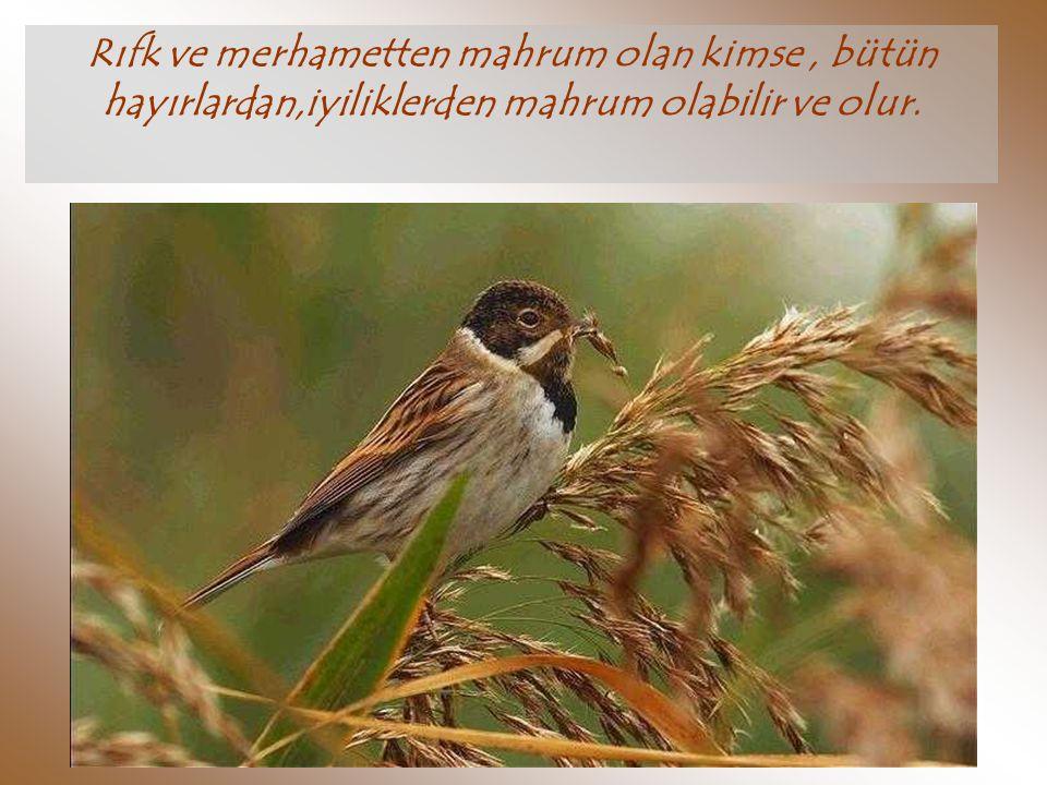 İ nsanlara merhamet etmeyen kimseye, Allah merhamet etmez.