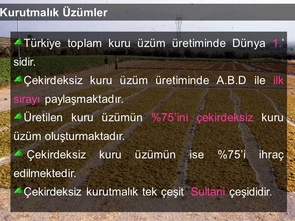 Kurutmalık Üzümler Türkiye toplam kuru üzüm üretiminde Dünya 1.' sidir.