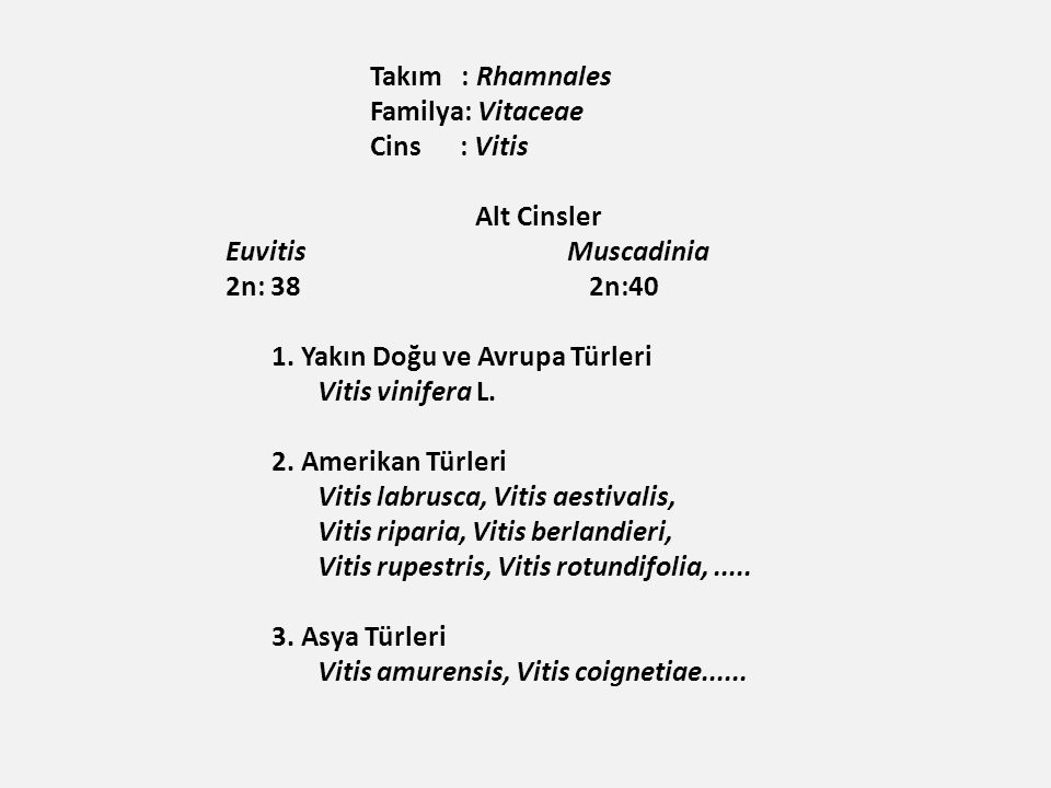 Takım : Rhamnales Familya: Vitaceae Cins : Vitis Alt Cinsler Euvitis Muscadinia 2n: 38 2n:40 1.