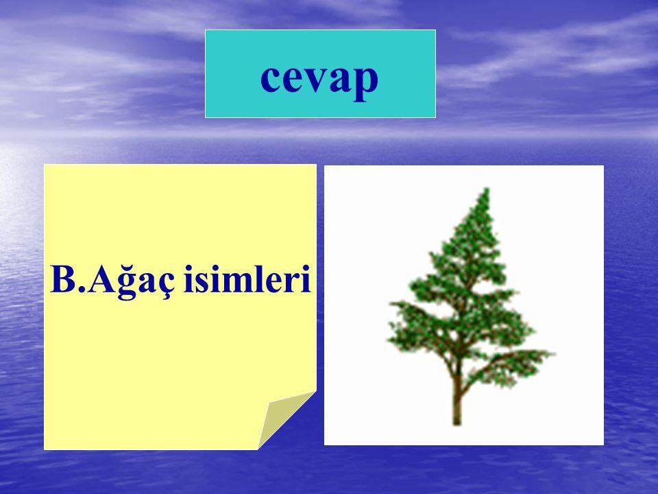 A. Gazete isimleri B.Ağaç isimleri C.Okul isimleri 7) Hangisi büyük harfle başlamaz?
