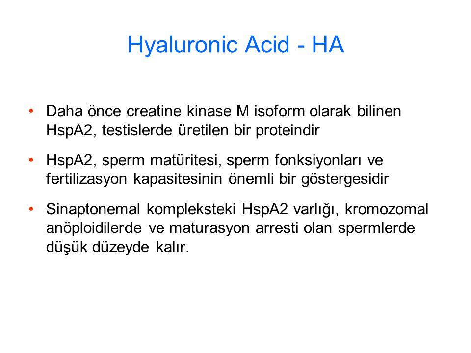 Hyaluronic Acid - HA Daha önce creatine kinase M isoform olarak bilinen HspA2, testislerde üretilen bir proteindir HspA2, sperm matüritesi, sperm fonksiyonları ve fertilizasyon kapasitesinin önemli bir göstergesidir Sinaptonemal kompleksteki HspA2 varlığı, kromozomal anöploidilerde ve maturasyon arresti olan spermlerde düşük düzeyde kalır.