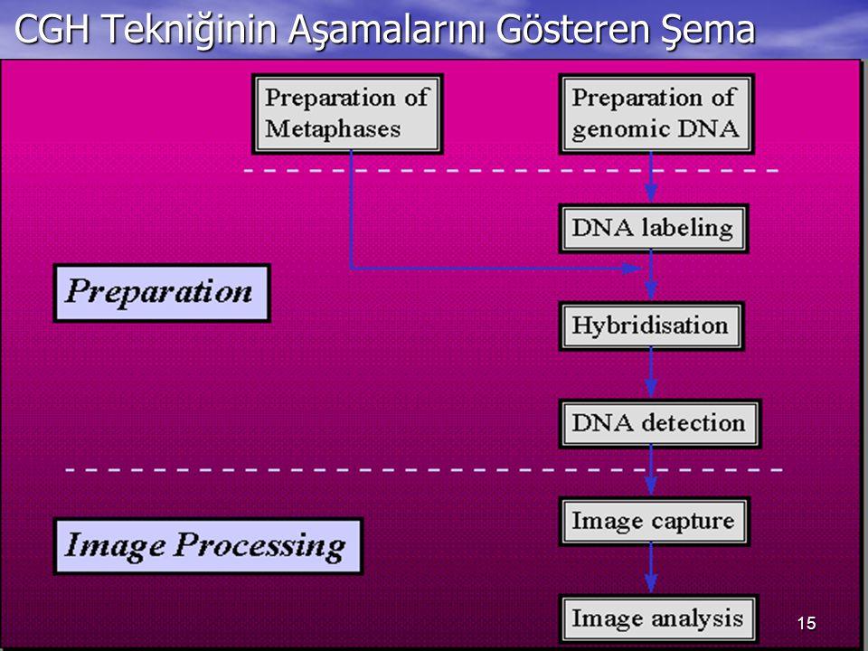 CGH Tekniğinin Aşamalarını Gösteren Şema CGH Tekniğinin Aşamalarını Gösteren Şema 15