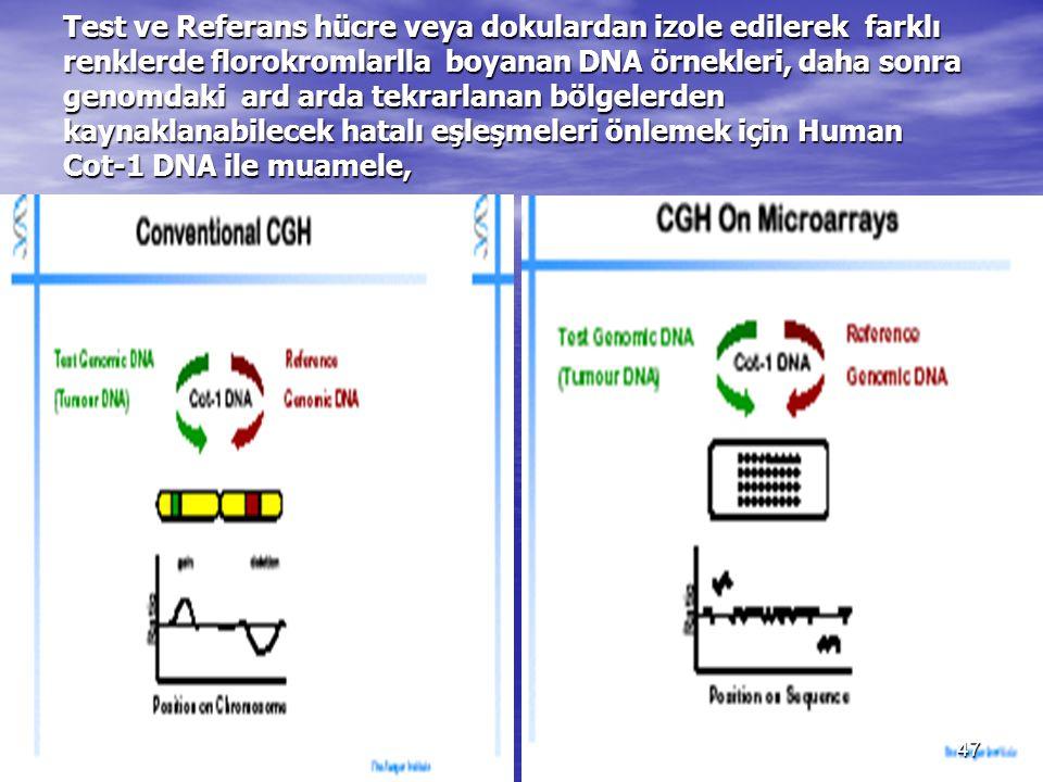 Test ve Referans hücre veya dokulardan izole edilerek farklı renklerde florokromlarlla boyanan DNA örnekleri, daha sonra genomdaki ard arda tekrarlana