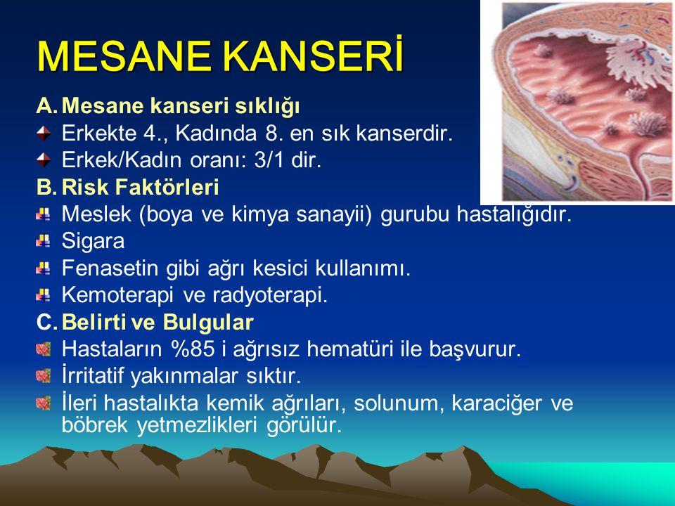 MESANE KANSERİ A.Mesane kanseri sıklığı Erkekte 4., Kadında 8. en sık kanserdir. Erkek/Kadın oranı: 3/1 dir. B.Risk Faktörleri Meslek (boya ve kimya s