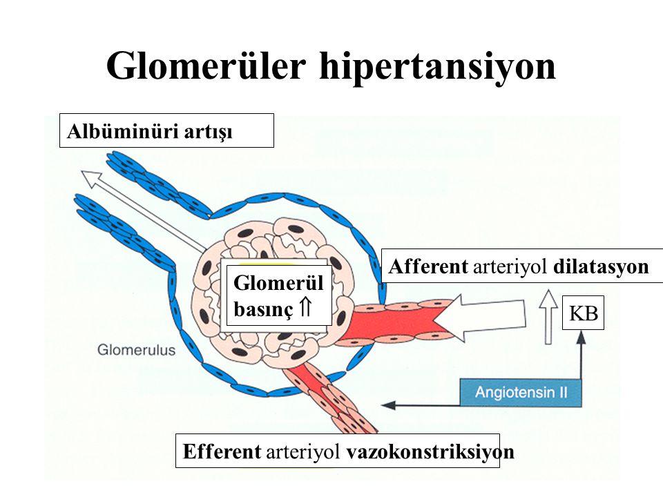 Glomerüler hipertansiyon Albüminüri artışı Glomerül basınç  Afferent arteriyol dilatasyon Efferent arteriyol vazokonstriksiyon KB