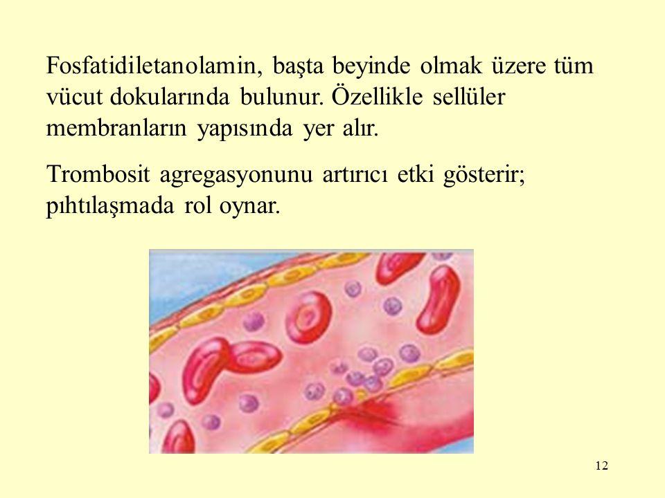 12 Fosfatidiletanolamin, başta beyinde olmak üzere tüm vücut dokularında bulunur.