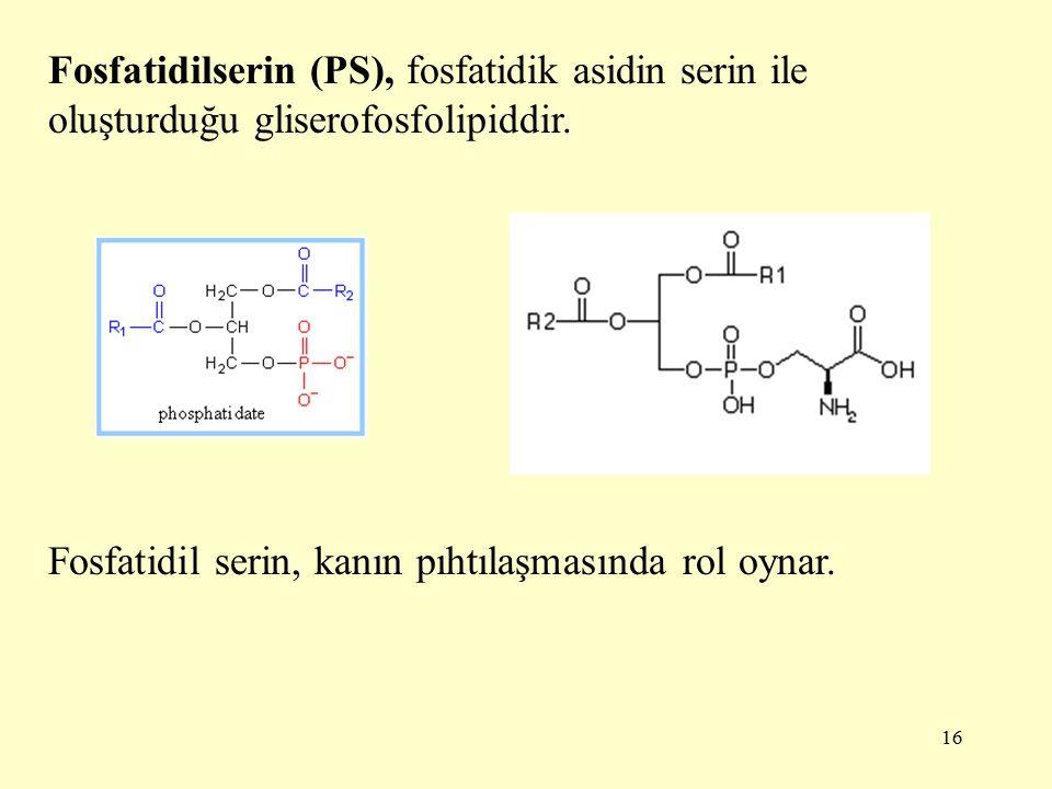 16 Fosfatidilserin (PS), fosfatidik asidin serin ile oluşturduğu gliserofosfolipiddir.