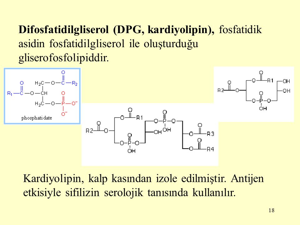 18 Difosfatidilgliserol (DPG, kardiyolipin), fosfatidik asidin fosfatidilgliserol ile oluşturduğu gliserofosfolipiddir.