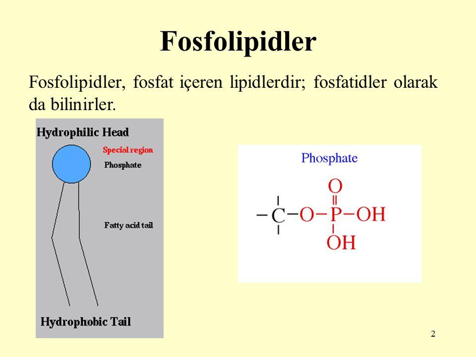 2 Fosfolipidler Fosfolipidler, fosfat içeren lipidlerdir; fosfatidler olarak da bilinirler.