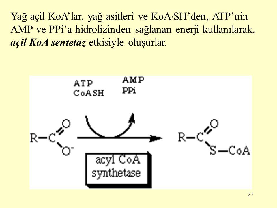 27 Yağ açil KoA'lar, yağ asitleri ve KoA  SH'den, ATP'nin AMP ve PPi'a hidrolizinden sağlanan enerji kullanılarak, açil KoA sentetaz etkisiyle oluşurlar.