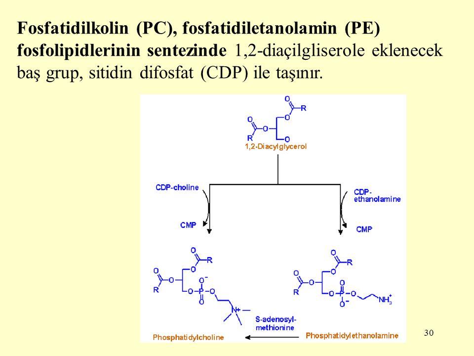 30 Fosfatidilkolin (PC), fosfatidiletanolamin (PE) fosfolipidlerinin sentezinde 1,2-diaçilgliserole eklenecek baş grup, sitidin difosfat (CDP) ile taşınır.