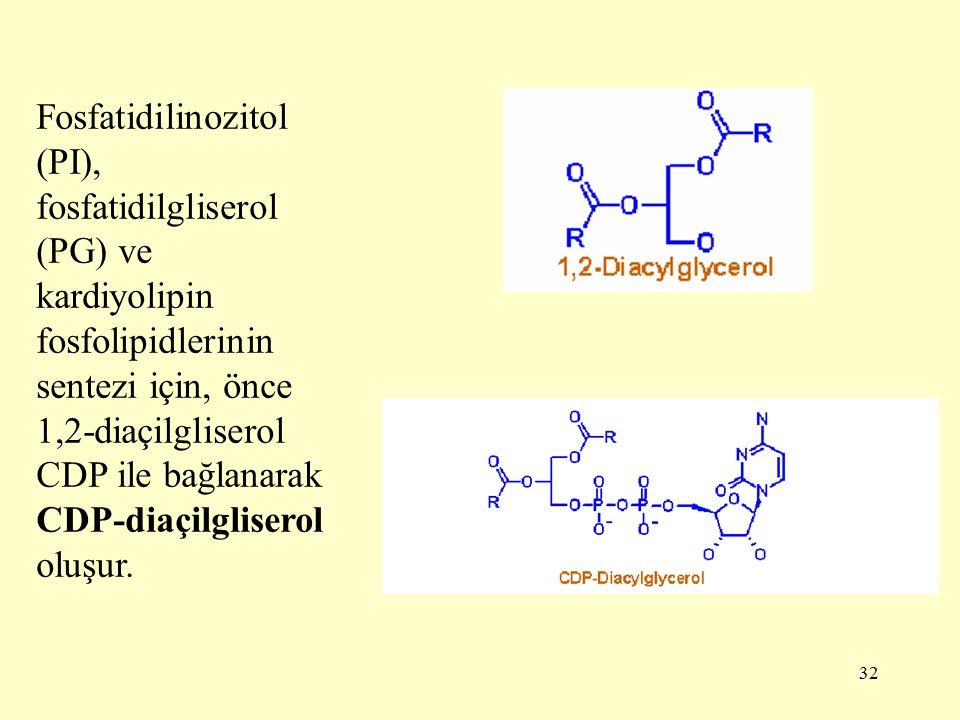 32 Fosfatidilinozitol (PI), fosfatidilgliserol (PG) ve kardiyolipin fosfolipidlerinin sentezi için, önce 1,2-diaçilgliserol CDP ile bağlanarak CDP-diaçilgliserol oluşur.
