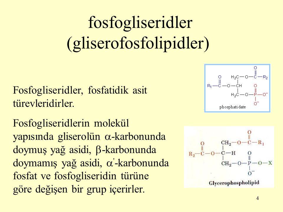 35 Fosfatidilgliserol-3- fosfattan fosfat ayrılmasıyla fosfatidilgliserol (PG) oluşur.