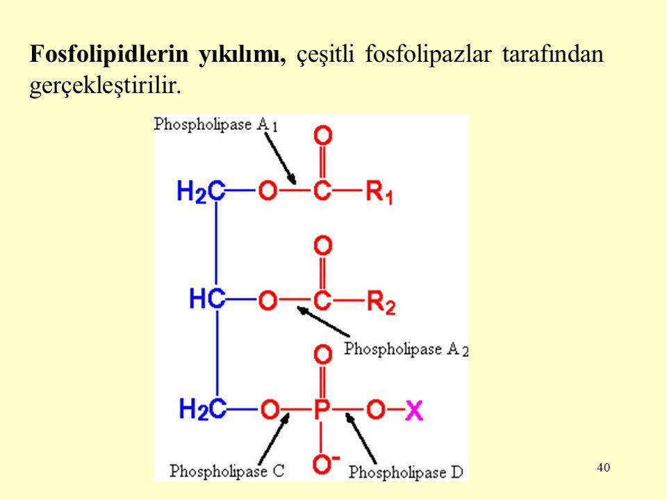 40 Fosfolipidlerin yıkılımı, çeşitli fosfolipazlar tarafından gerçekleştirilir.