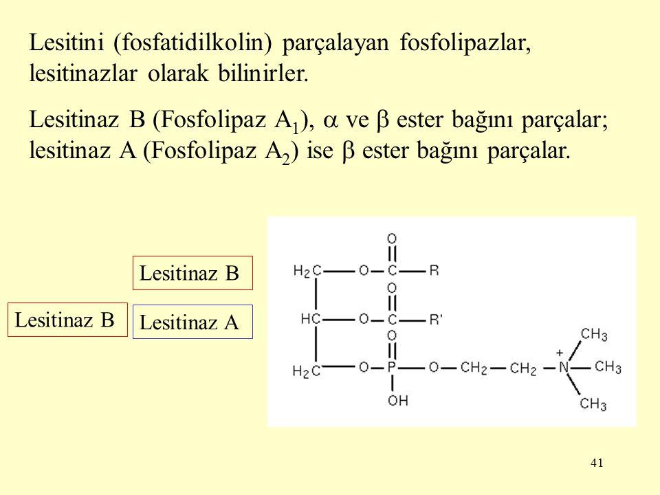 41 Lesitini (fosfatidilkolin) parçalayan fosfolipazlar, lesitinazlar olarak bilinirler.