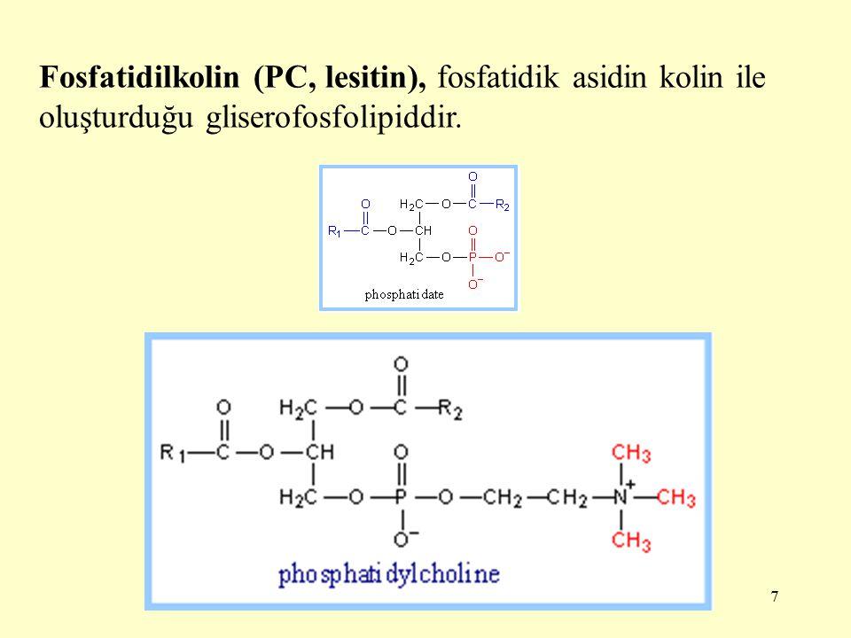 7 Fosfatidilkolin (PC, lesitin), fosfatidik asidin kolin ile oluşturduğu gliserofosfolipiddir.