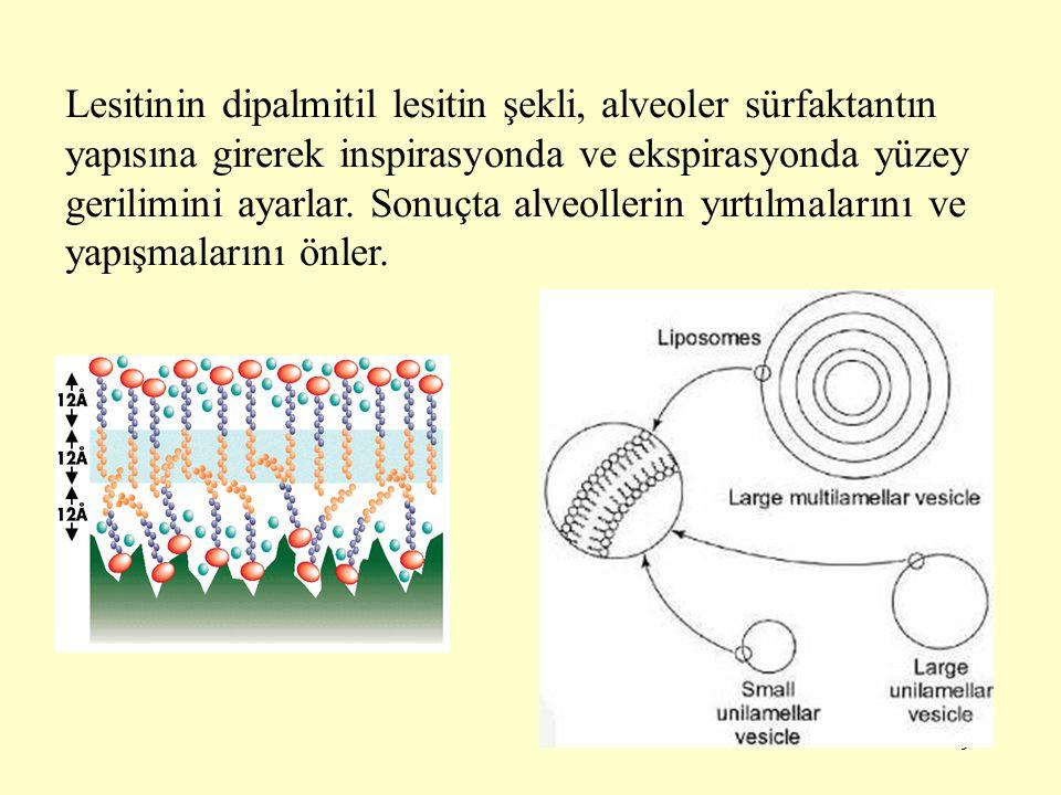9 Lesitinin dipalmitil lesitin şekli, alveoler sürfaktantın yapısına girerek inspirasyonda ve ekspirasyonda yüzey gerilimini ayarlar.