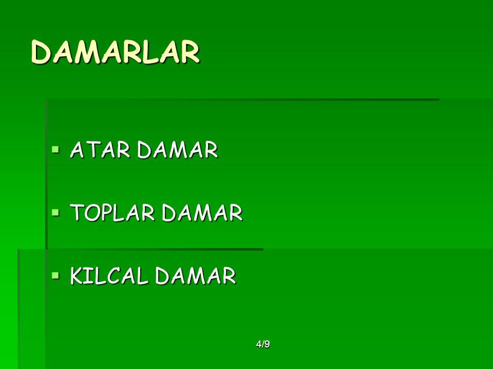 4/9 DAMARLAR  ATAR DAMAR  TOPLAR DAMAR  KILCAL DAMAR