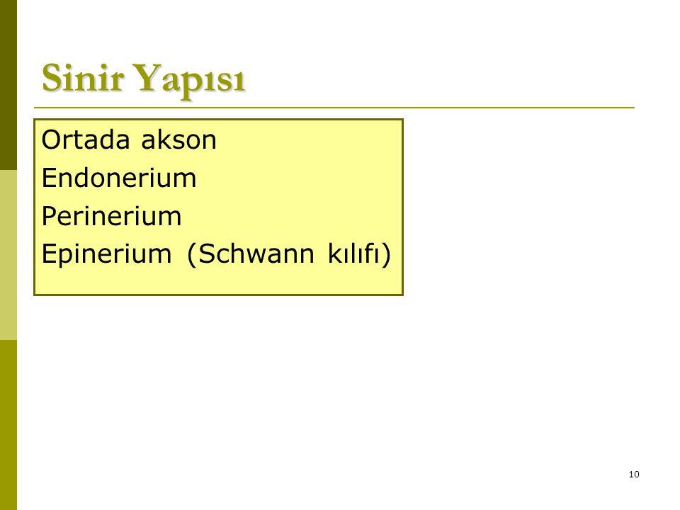 10 Sinir Yapısı Ortada akson Endonerium Perinerium Epinerium (Schwann kılıfı)