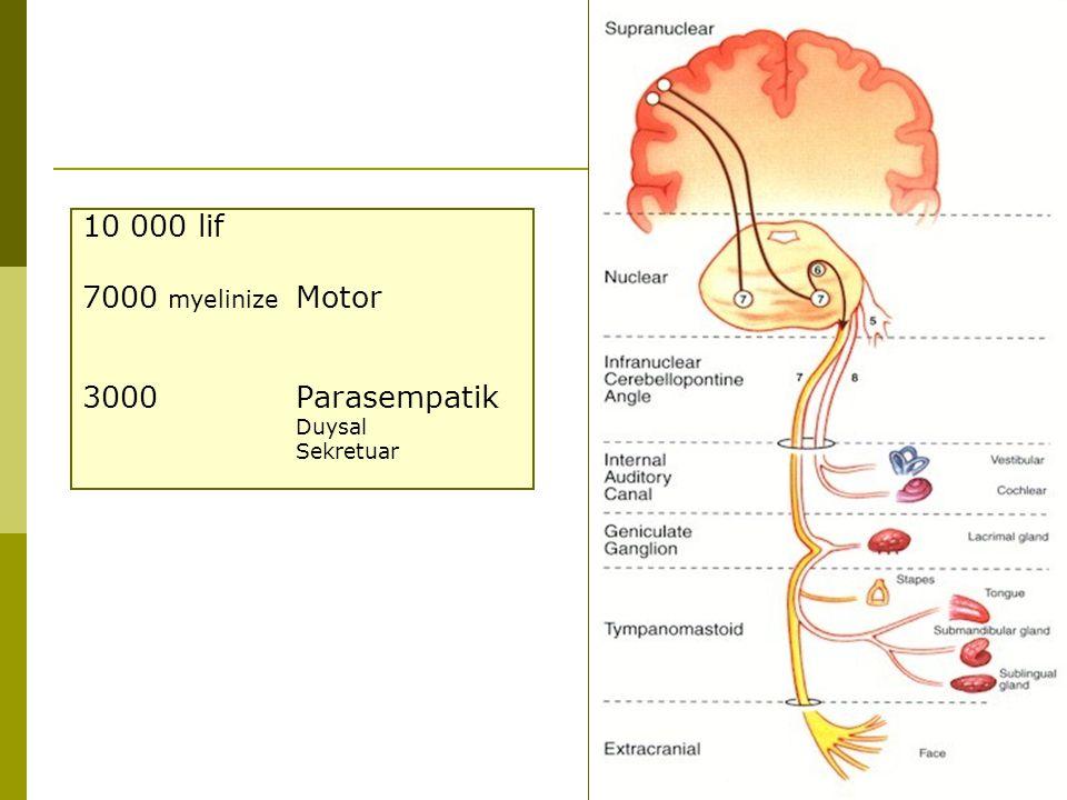 2 10 000 lif 7000 myelinize Motor 3000 Parasempatik Duysal Sekretuar