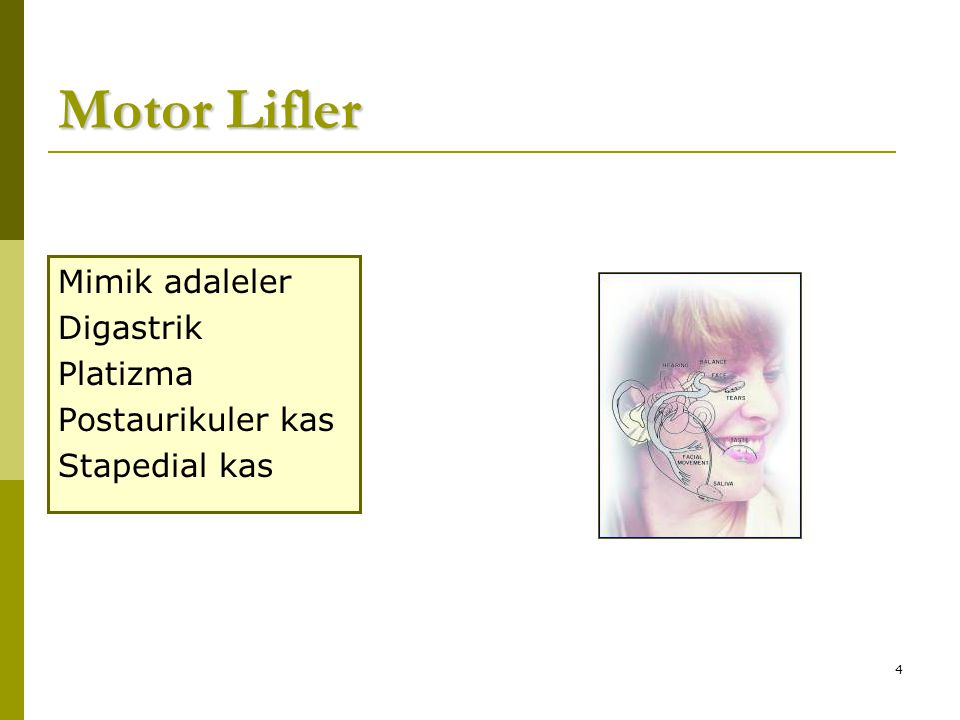 4 Motor Lifler Mimik adaleler Digastrik Platizma Postaurikuler kas Stapedial kas