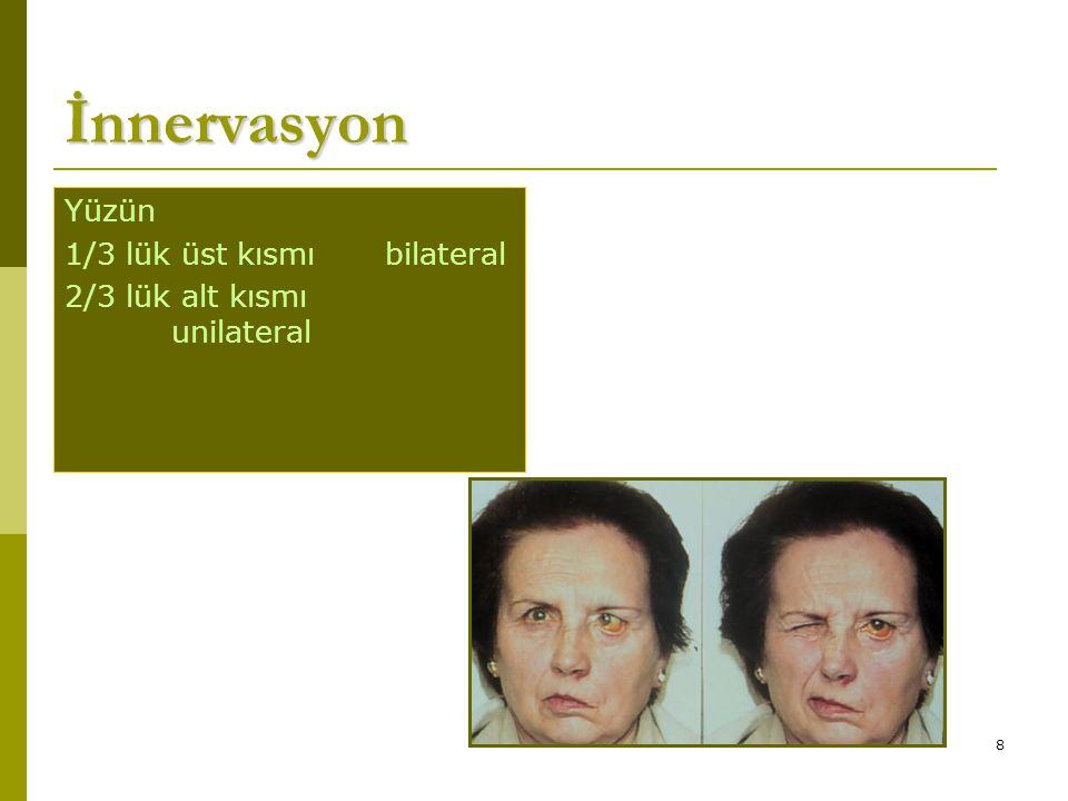 8 İnnervasyon Yüzün 1/3 lük üst kısmıbilateral 2/3 lük alt kısmı unilateral