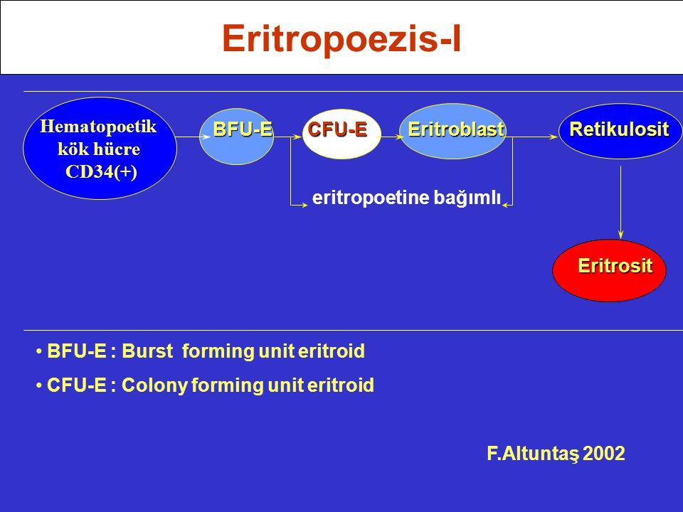 BFU-E CFU-E Eritroblast Retikulosit BFU-E CFU-E Eritroblast Retikulosit eritropoetine bağımlı Eritrosit Eritrosit BFU-E : Burst forming unit eritroid CFU-E : Colony forming unit eritroid F.Altuntaş 2002 Eritropoezis-I Hematopoetik kök hücre CD34(+)