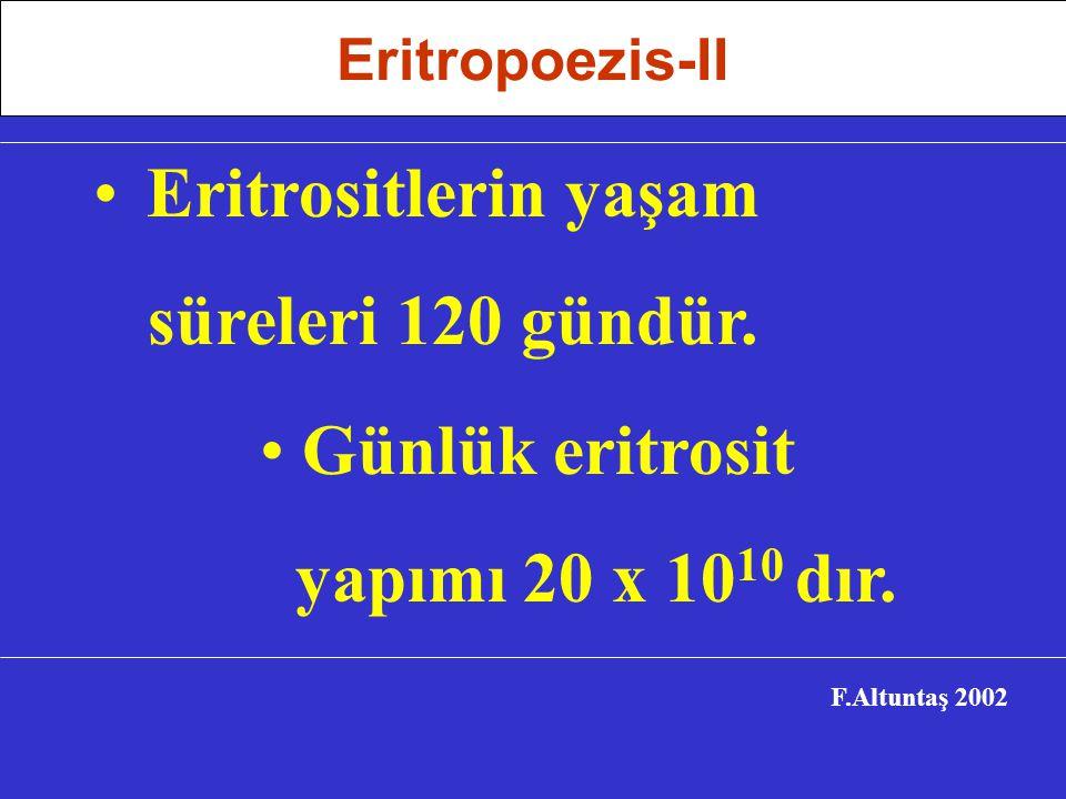 Eritrositlerin yaşam süreleri 120 gündür.F.Altuntaş 2002 Günlük eritrosit yapımı 20 x 10 10 dır.