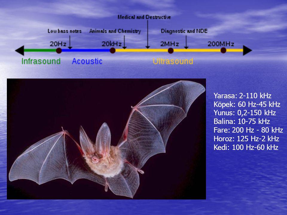 Yarasa: 2-110 kHz Köpek: 60 Hz-45 kHz Yunus: 0,2-150 kHz Balina: 10-75 kHz Fare: 200 Hz - 80 kHz Horoz: 125 Hz-2 kHz Kedi: 100 Hz-60 kHz