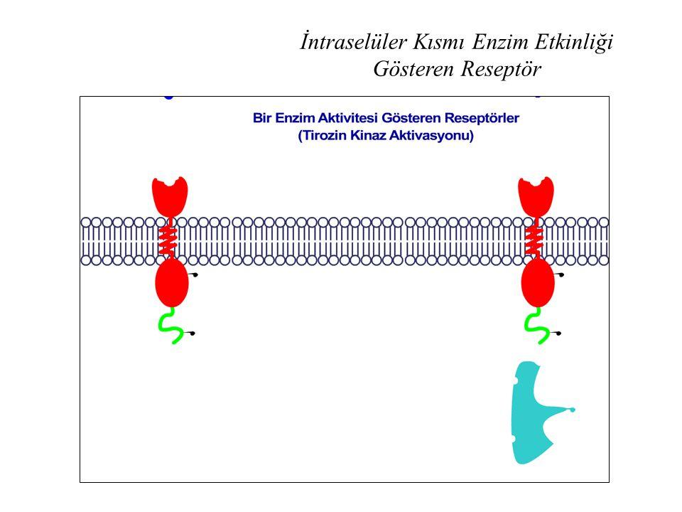 İntraselüler Kısmı Enzim Etkinliği Gösteren Reseptör