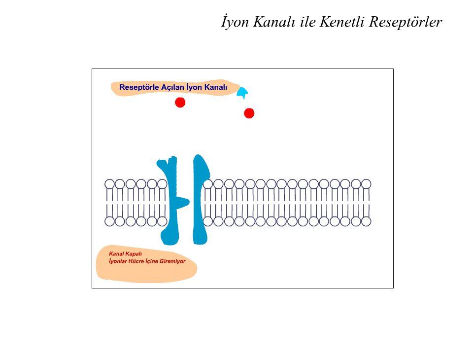 İyon Kanalı ile Kenetli Reseptörler