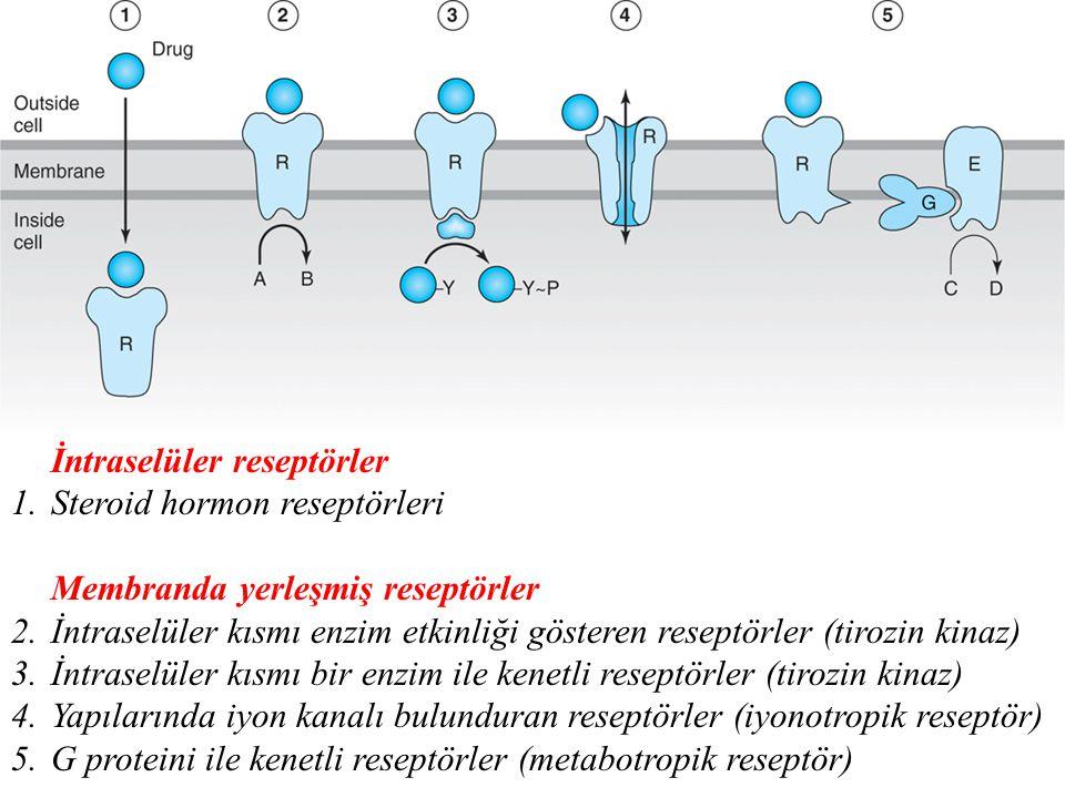 İntraselüler reseptörler 1.Steroid hormon reseptörleri Membranda yerleşmiş reseptörler 2.İntraselüler kısmı enzim etkinliği gösteren reseptörler (tiro