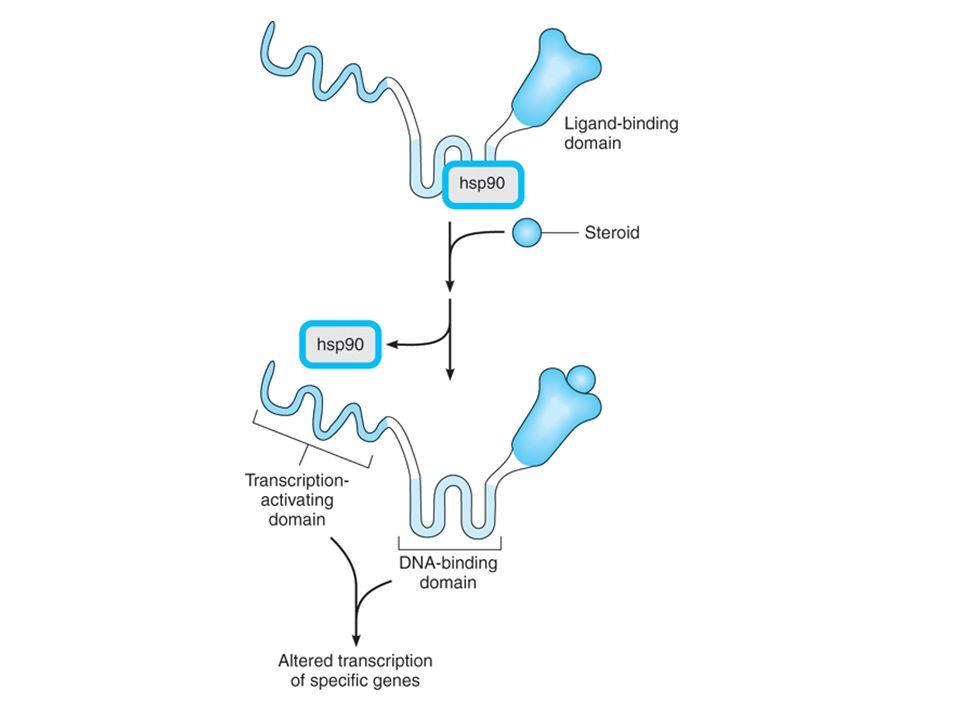 Steroid Reseptörünün Yapısı İnhibitör protein kompleksi (hsp90) Transkripsiyonu aktive eden bölge Hormon bağlanma bölgesi Hormon DNA'ya bağlanan bölge
