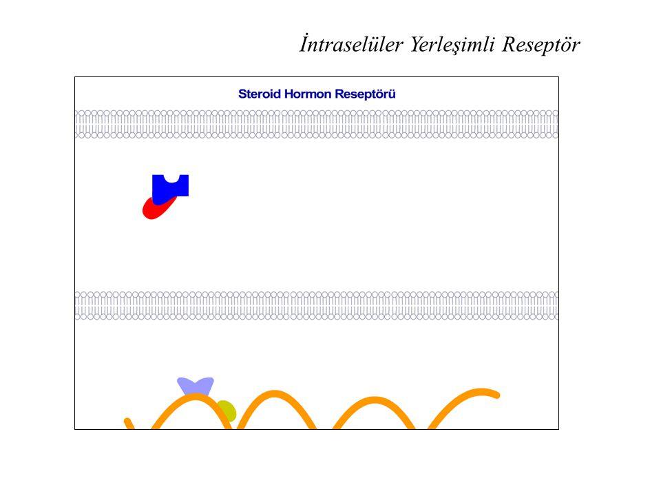 PIP 2 : Fosfatidil İnositol Bifosfat DAG: Diasilgliserol IP 3 : İnositol Trifosfat