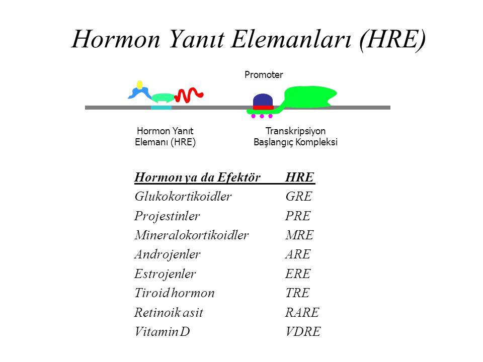 Hormon Yanıt Elemanları (HRE) Hormon ya da EfektörHRE GlukokortikoidlerGRE ProjestinlerPRE MineralokortikoidlerMRE AndrojenlerARE EstrojenlerERE Tiroi