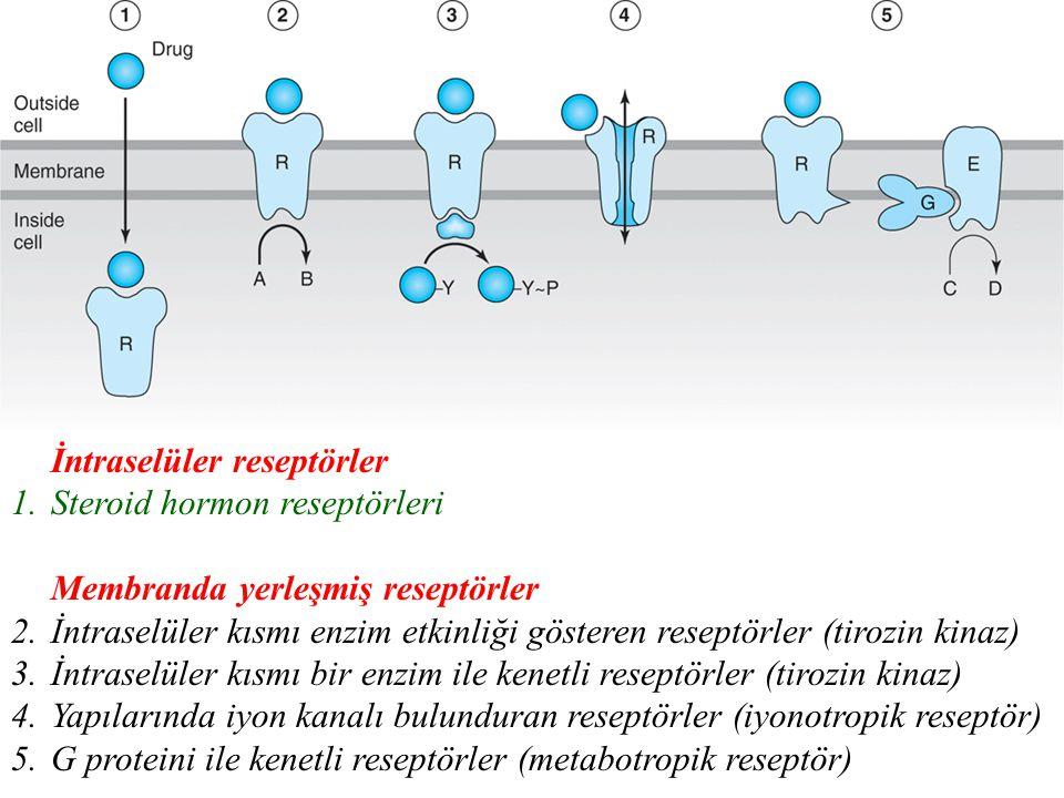 İntraselüler reseptörler 1.Steroid hormon reseptörleri Membranda yerleşmiş reseptörler 2.İntraselüler kısmı enzim etkinliği gösteren reseptörler (tirozin kinaz) 3.İntraselüler kısmı bir enzim ile kenetli reseptörler (tirozin kinaz) 4.Yapılarında iyon kanalı bulunduran reseptörler (iyonotropik reseptör) 5.G proteini ile kenetli reseptörler (metabotropik reseptör)