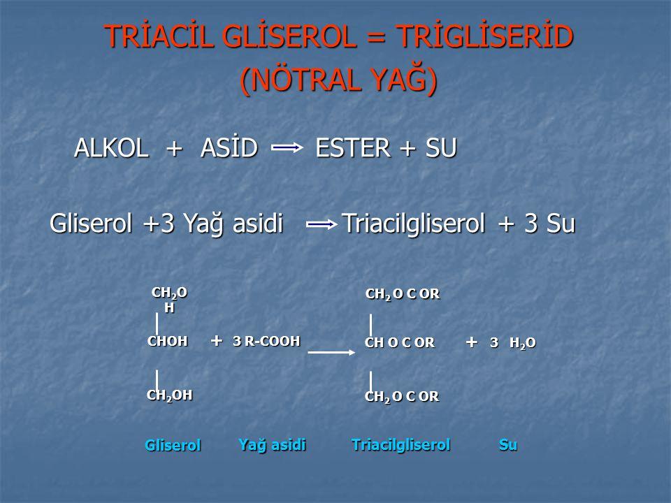 TRİACİL GLİSEROL = TRİGLİSERİD (NÖTRAL YAĞ) ALKOL + ASİD ESTER + SU ALKOL + ASİD ESTER + SU Gliserol +3 Yağ asidi Triacilgliserol + 3 Su Gliserol +3 Y